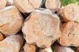 Top 10 thị trường xuất khẩu gỗ nhiều nhất của Việt Nam trong 6 tháng đầu năm 2020