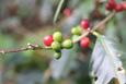 Nhìn lại năm 2020 đầy thách thức của thị trường cà phê thế giới