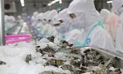 Thủy sản Minh Phú sắp thanh toán gần 300 tỉ đồng cổ tức tiền mặt