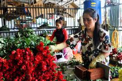Hoa hồng Đà Lạt tăng giá gấp ba